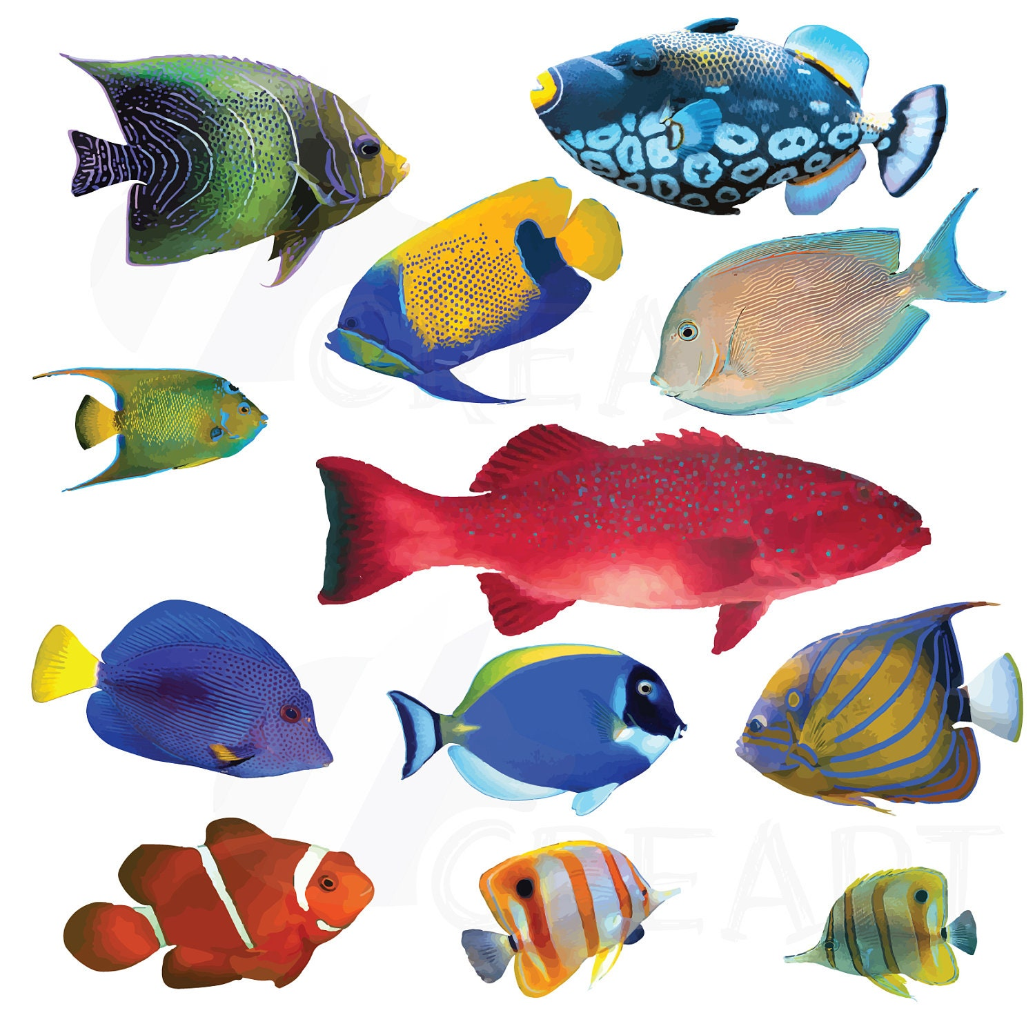 Watecolor Tropical Fish Clip Art 12 tropical fish vectors
