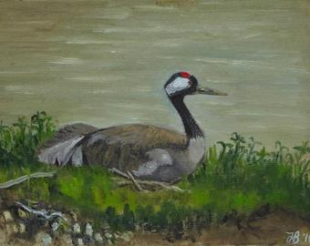 "Wild Crane on nest, Slimbridge, small unframed original oil painting, canvas board 5x7"""