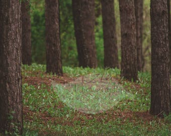 Spring Forest Digital Photography Backdrop Background