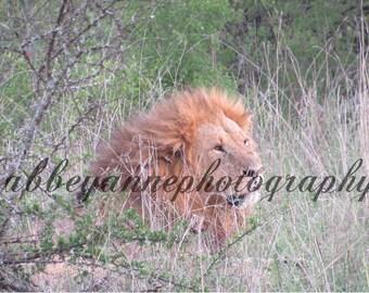 Photo of Lion, Kenya, Africa