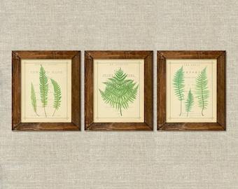 Green ferns vintage botanical printable wall art décor set of 3
