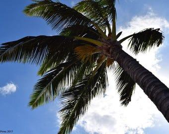 Maui Hawaii Palm Tree