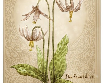Pink Faun Lillies by Renae Taylor