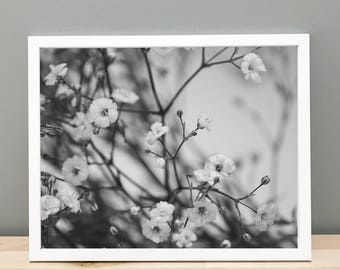 Black and White Baby's Breath Printable Art Photography