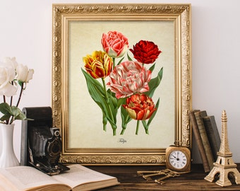 Antique Botanical Print, Tulip Print, Red and Yellow Tulip Print, Vintage Home Decor, Natural History Art, Decorative Reproduction FL086