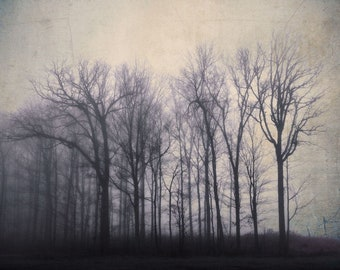 """Landscape photography dreamy foggy woodland print dark purple ethereal forest - """"The silence between the trees"""" 8 x 10"""