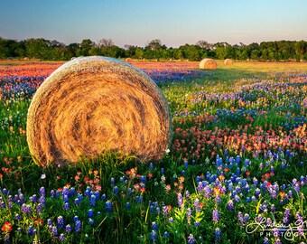 "Texas Wildflower Photo | ""Hay Bales & Wildflowers"" | Texas Flowers Wall Art | Texas Landscape - Bluebonnet Field - Texas Hay Bales Decor"