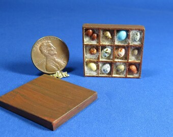 Collector Miniature 1:12 Scale BIRD EGG COLLECTION in Wooden Box ooak