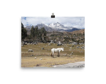 A white horse in the land of the Inca
