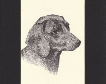Smooth Haired Dachshund Vintage Dog Print by C.Francis Wardle - 1935 Print of Drawing, Mounted with Mat