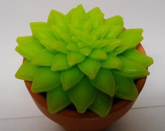 Succulent soap pot,  Soap succulent gift,    Succulent gift,  Gardeners delight,   Terracotta pot,   Grandad gift,
