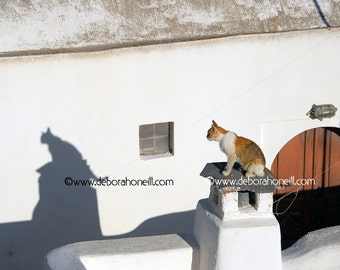 """Funny Animal Photography """"Cat Shadow in Oia, Greece"""""""