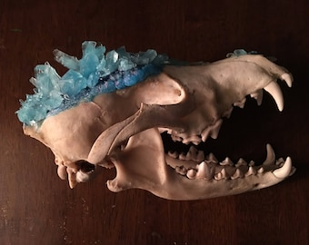 Crystal coyote skull