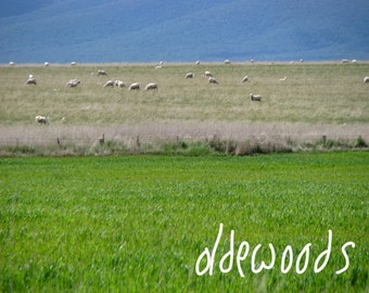 Sheep Grazing Landscape Greenery - Downloadable Digital Image (text not included)
