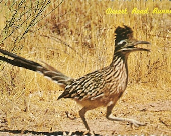 Vintage 1970s Postcard Road Runner Greater Roadrunner New Mexico State Bird Desert Animal Card Photochrome Era Postally Unused