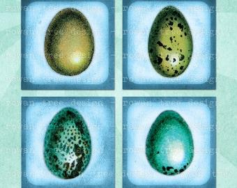 VINTAGE BIRDS EGGS Digital Collage Sheet 1.5in or 1in Squares Printable Download - no. 0075