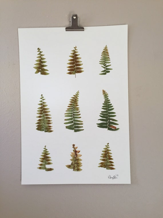 11.5x16.5 Fishtail Fern Herbarium- Pressed Fern Display- Real Fern Botanical Art- Large Foliage Art- Framable Fern Art- Specimen Art