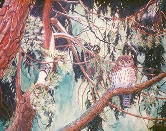 Pigmy Owl Original Watercolor Painting
