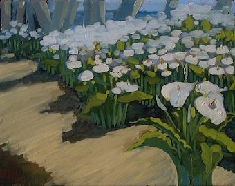 Calla Lilies, 12''x9'' Oil