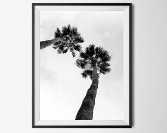 Palm Tree Photography, Palm Tree Print, Palm Tree Printable, Tropical Decor, Palm Tree Wall Art, Tropical Photography, Printable Palm Tree