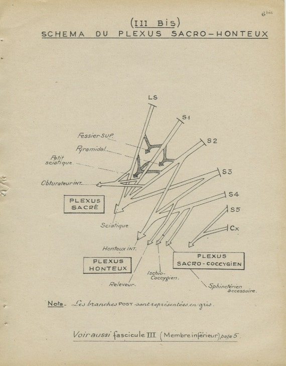 Human Anatomy Print 19476b Pudenda Nervous System Vintage