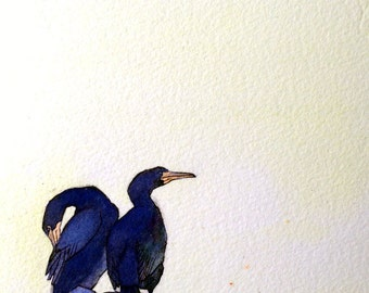 Art Card; Double-Crested Cormorant
