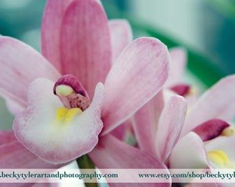 Cymbidium Orchid Archival Print