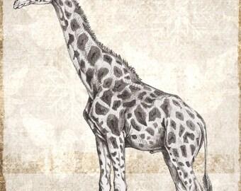 Digital download vintage look giraffe