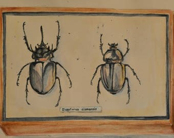 Pair of beetles, original watercolour painting.
