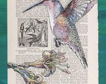 Hummingbird with Flower - Birding Art on book page - Museum Quality Giclée Print