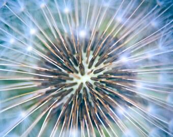 Dandelion Wall Art, Macro Photography, Dandelion Print, Flower Photography, Blue Abstract Art, Flower Print, Dandelion Seeds, Large Wall Art
