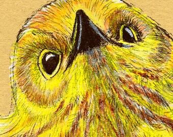Yellow Warbler Bird 8 x 10 inch Giclée Art Print, Yellow Bird Art, Colored Pencil Art