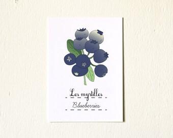 French Kitchen Art illustration Blueberries Summer Fruit 5x7 Giclee Fine Art Print French Retro Kitchen Blue Home Decor Nature berries