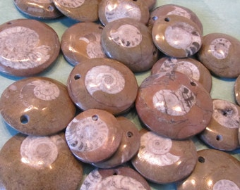 4 Pc Lot  Fossilized Goniatite / Ammonite Drilled Cabs / Bead for jewelry making, snail (12tu280)