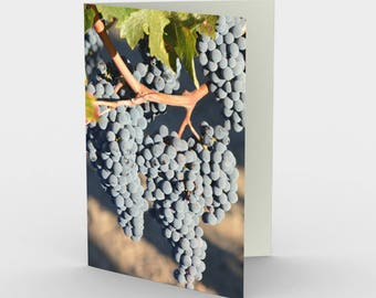 Syrah Grapes - Wine Grapes - Vineyard - Set of 3 Blank Cards - Wine Lover Gift - Winemaker Gift - Wine Cards - Syrah Wine - Thank You Cards