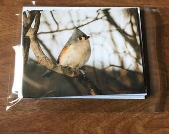 Bird Note Cards, Tufted Titmouse note cards, single-sided blank note cards, post cards, 8 photographic note cards, stationery