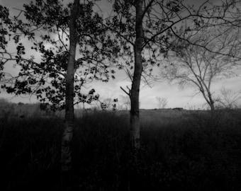 "Fine Art Photography Print- ""Two Birches"""