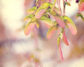 "CLEARANCE Flower Photo, Nature Photography, Pastel Pink, Tree Photo, Green, Grey, Pink, Leaves - 5x5 inch Print - ""The Watermelon Tree"""