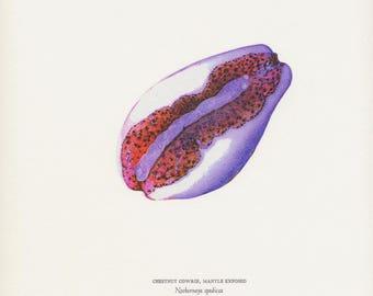 Letterpress printed print - Chestnut Cowie, Neobernaya spadicea