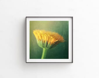 "Floral Art, Gifts for Her, Instant Download, Digital Download, Nature Photography, Botanical Print, Botanical Art, Wall Decor ""BLOOMING"""