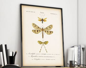 Entomology art, Vintage insect print, Printable art, Instant download antique insect print, Spoonwing, Lacewing fly, Owl fly, Ant lion,
