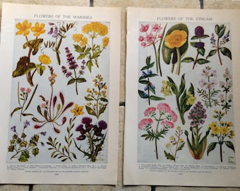 1947 Flowers of the Marshes and Stream Vintage Illustrations