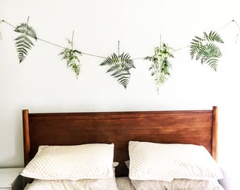 forest fern botanical banner  |  preserved ferns