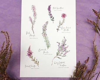 Heather Botanical  Print