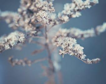Nature Photography Winter art frost macro decor light blue white ice cold dead plant snow brown tan under 50 photo photograph fine art print