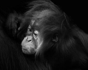 Baby Animal Photography Baby Orangutan Nature Photography Wildlife Photography Girl's Room Decor Baby Animal Print Wild Baby Animal Wall Art