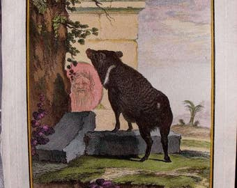 1783 Pig, Foraging in Ruins. Buffon Antique Handcolored Engraving. Original Natural History Over 200 years old. Vintage Zoology, Mammal