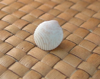 SALE:  Cockle Shell Tie Tack - 75% Off
