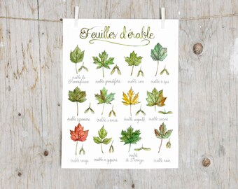 Print Maple Leaves | Poster botanical painting, tree leaf | Canada USA trees, North America's maple | Herbalism  | English OR French Poster