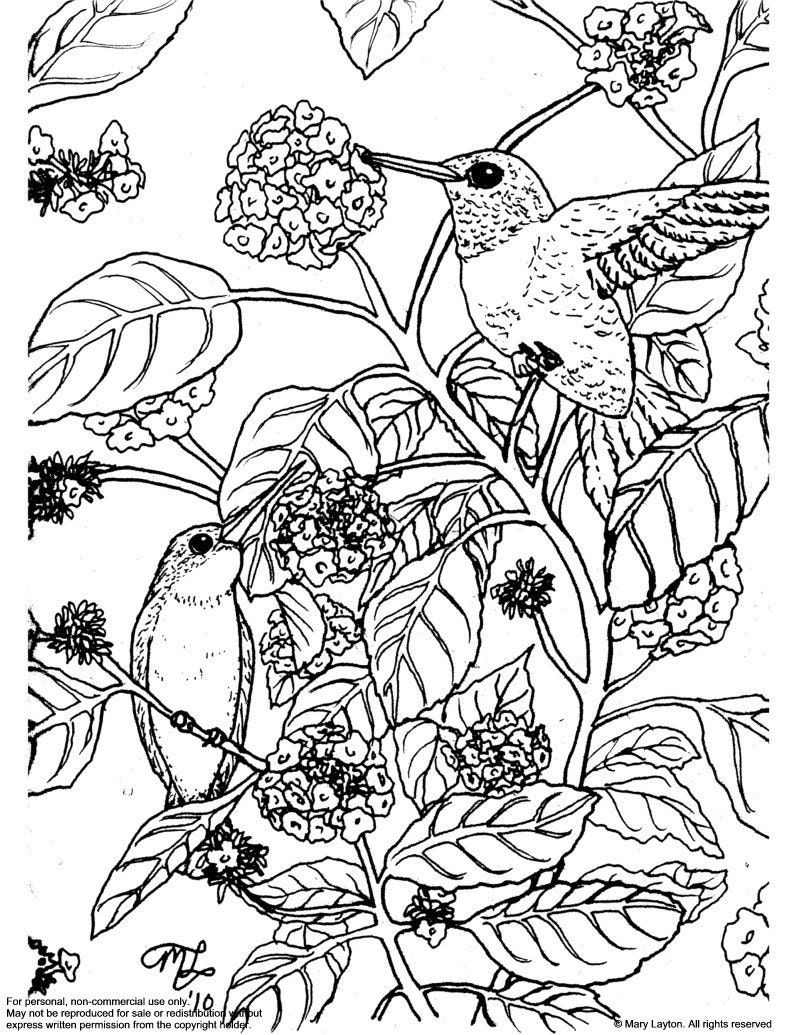 Downloadable coloring page Ruby Throated Hummingbirds on